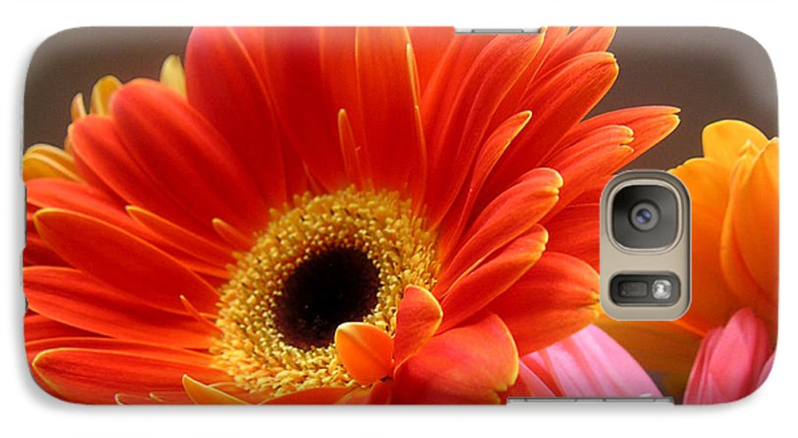 Nature Galaxy S7 Case featuring the photograph Gerbera Daisies - Luminous by Lucyna A M Green