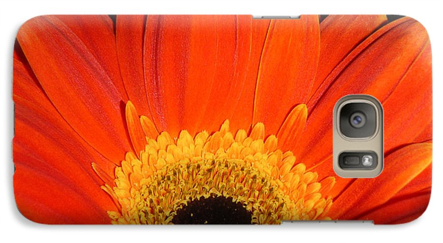 Nature Galaxy S7 Case featuring the photograph Gerbera Daisy - Glowing In The Dark by Lucyna A M Green