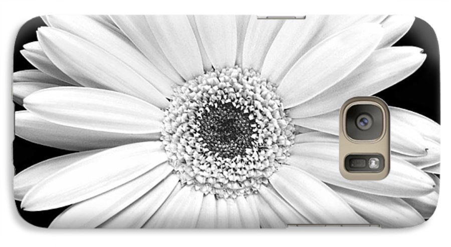 Gerber Galaxy S7 Case featuring the photograph Single Gerbera Daisy by Marilyn Hunt