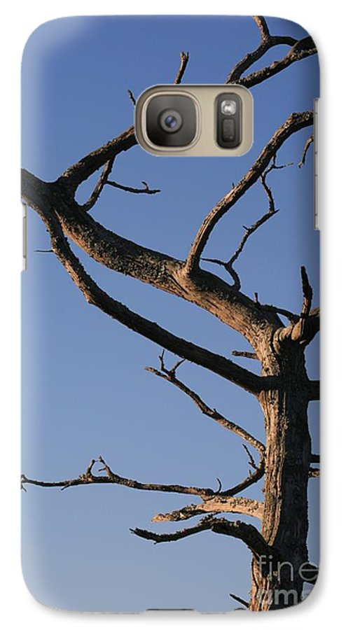 Tree Galaxy S7 Case featuring the photograph Gnarly Tree by Nadine Rippelmeyer