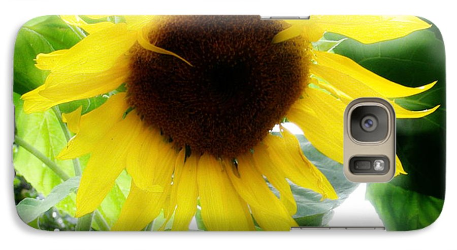 Sunflower Galaxy S7 Case featuring the photograph Golden Beauty by Idaho Scenic Images Linda Lantzy