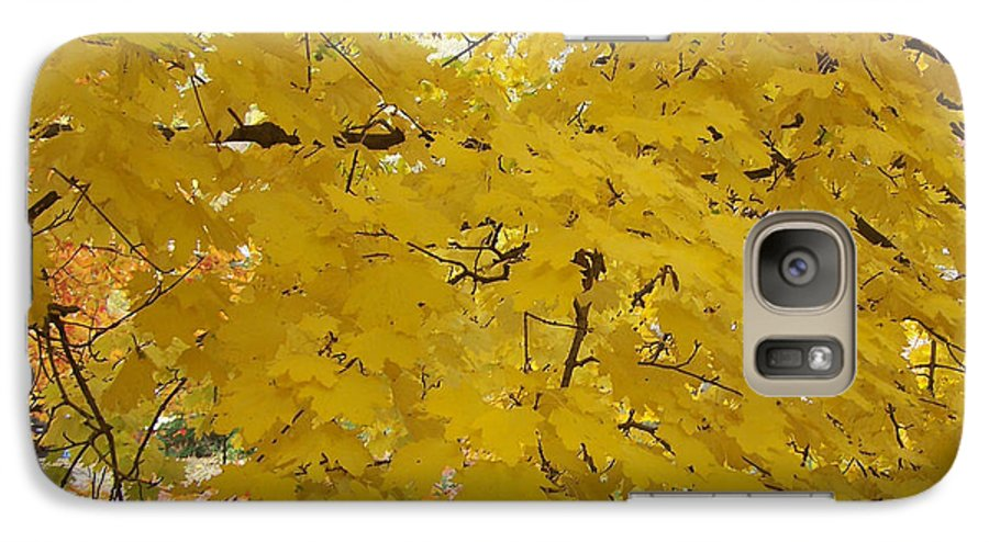Fall Autum Trees Maple Yellow Galaxy S7 Case featuring the photograph Golden Canopy by Karin Dawn Kelshall- Best