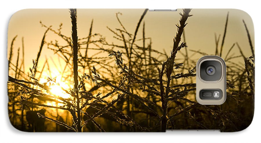 Golden Galaxy S7 Case featuring the photograph Golden Corn by Idaho Scenic Images Linda Lantzy