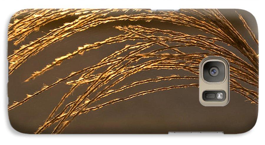 Grass Galaxy S7 Case featuring the photograph Golden Grass by Douglas Barnett