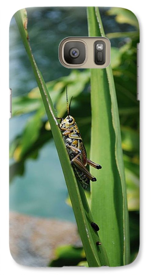 Field Galaxy S7 Case featuring the photograph Grasshopper by Margaret Fortunato