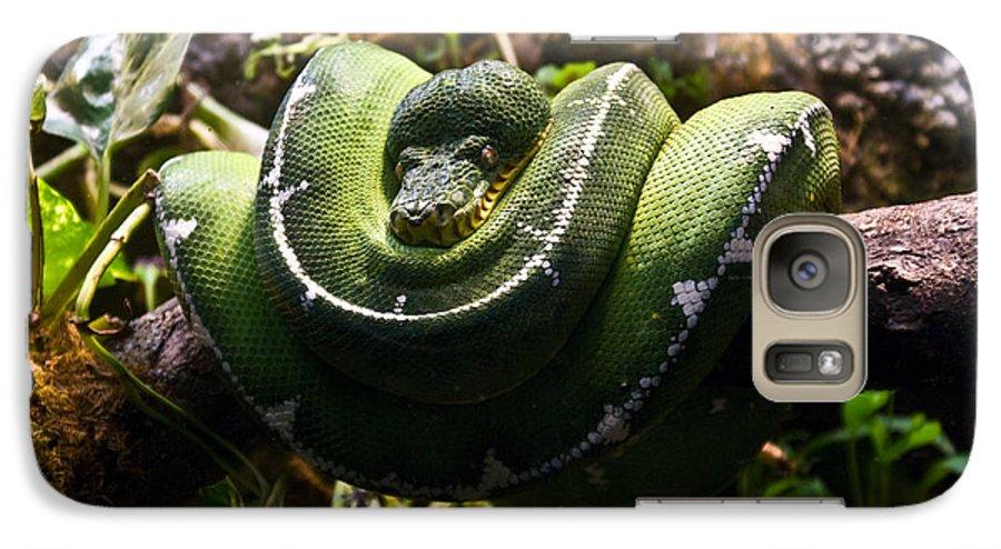 Green Galaxy S7 Case featuring the photograph Green Boa by Douglas Barnett