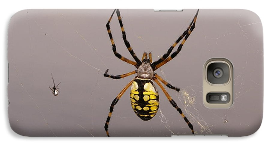 Spiders Galaxy S7 Case featuring the photograph Hanging In There by Debbie May