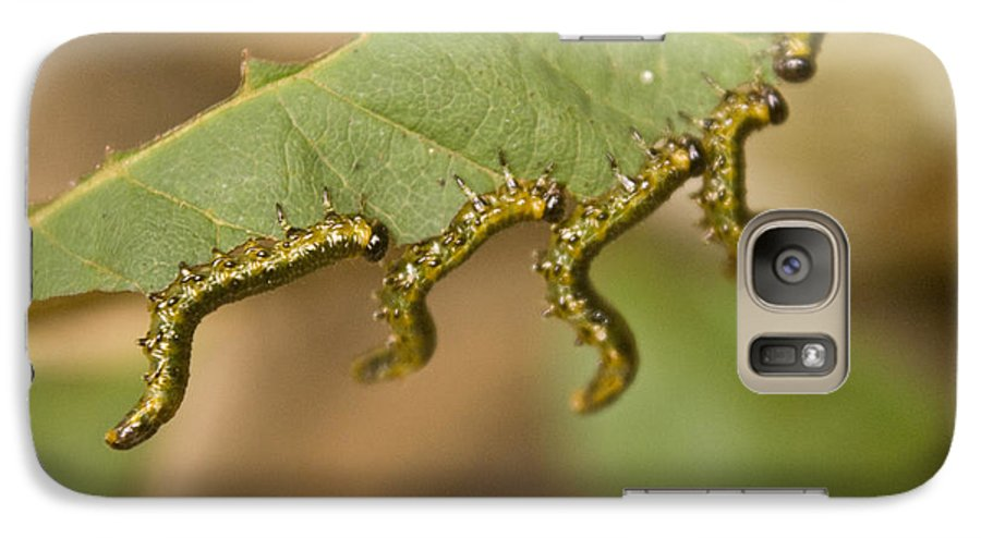 Larvae Galaxy S7 Case featuring the photograph Hanging There by Douglas Barnett