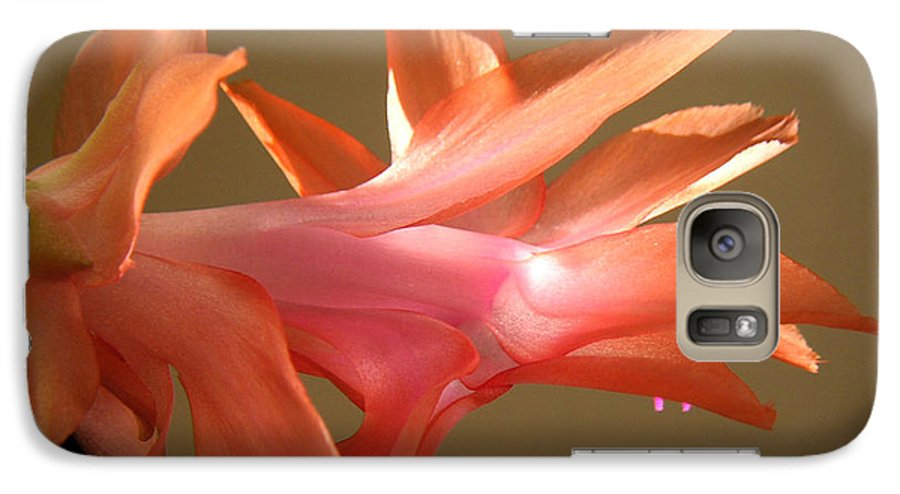 Nature Galaxy S7 Case featuring the photograph Holiday Cactus - In Morning Light by Lucyna A M Green
