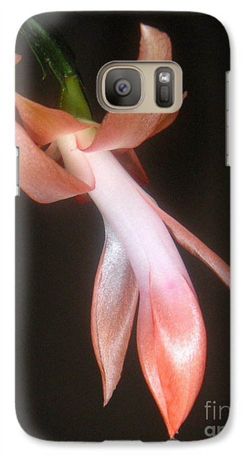 Nature Galaxy S7 Case featuring the photograph Holiday Cactus - In Night Light by Lucyna A M Green