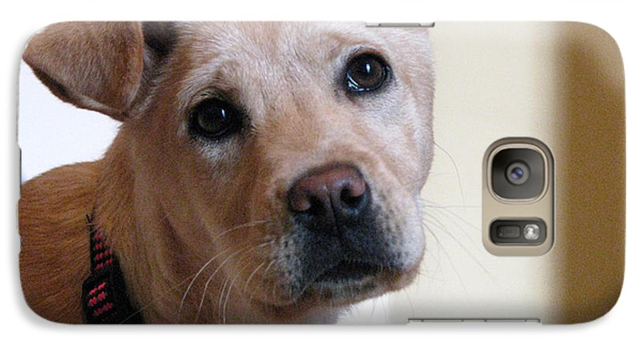 Dog Galaxy S7 Case featuring the photograph Honey by Amanda Barcon