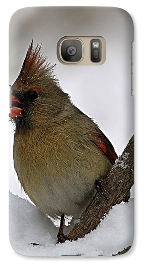 Bird Galaxy S7 Case featuring the photograph I Love Seeds by Gaby Swanson