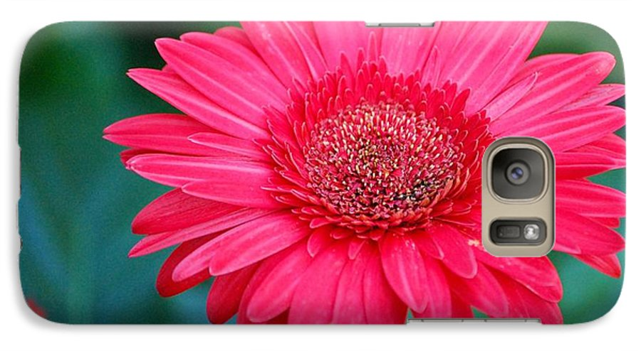 Gerber Daisy Galaxy S7 Case featuring the photograph In The Pink by Debbi Granruth