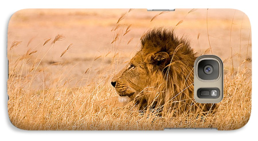 3scape Galaxy S7 Case featuring the photograph King Of The Pride by Adam Romanowicz