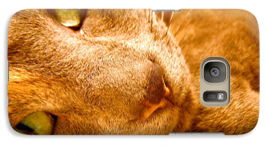 Cats Galaxy S7 Case featuring the photograph Kitty by Amanda Barcon