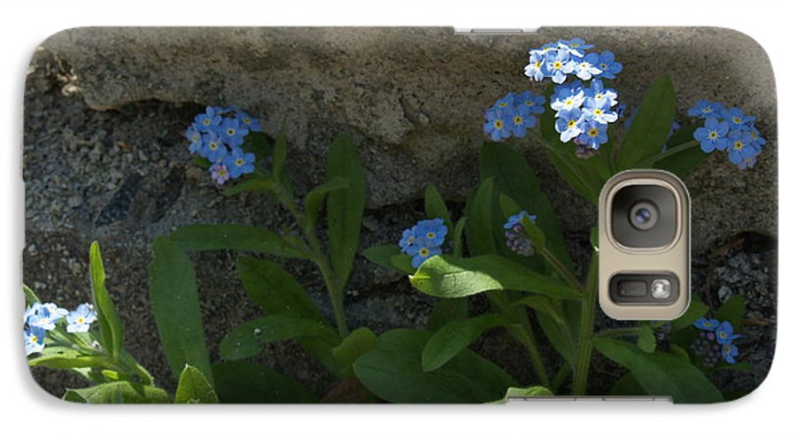 Forget-me-nots Galaxy S7 Case featuring the photograph Life Will Prevail by Anna Lisa Yoder