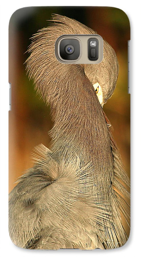 Heron Galaxy S7 Case featuring the photograph Little Blue Heron Feeling Bashful by Max Allen