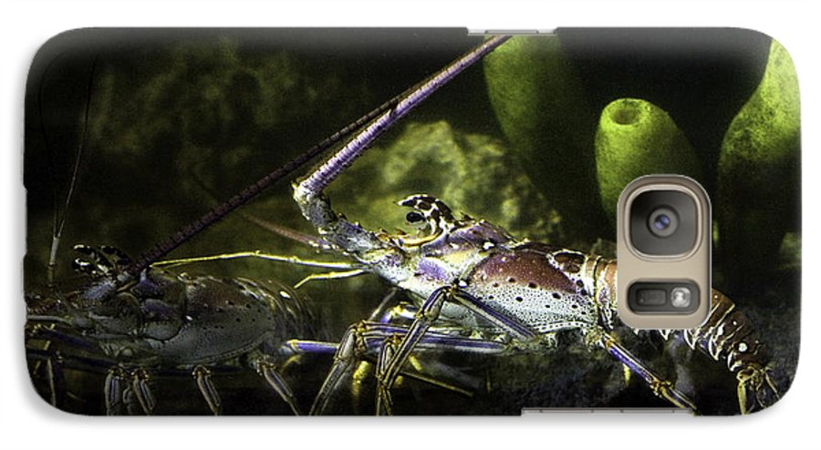 Lobster Galaxy S7 Case featuring the photograph Lobster In Love by Marilyn Hunt