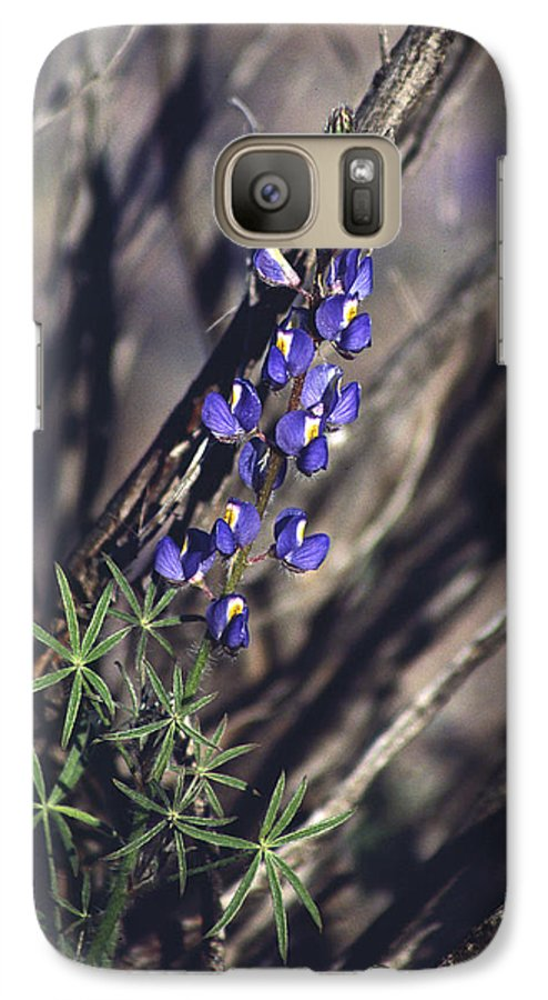 Flower Galaxy S7 Case featuring the photograph Lonely Lupine by Randy Oberg