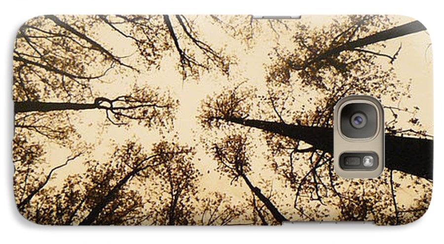 Trees Galaxy S7 Case featuring the photograph Looking Up by Jack Paolini