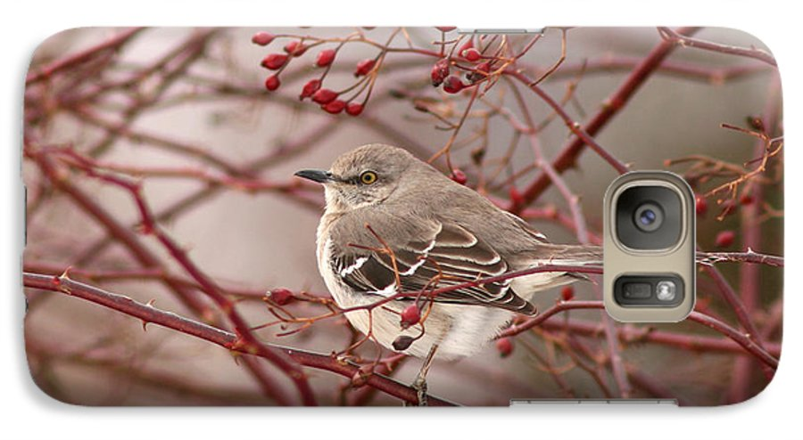 Mockingbird Galaxy S7 Case featuring the photograph Mockingbird In Winter Rose Bush by Max Allen