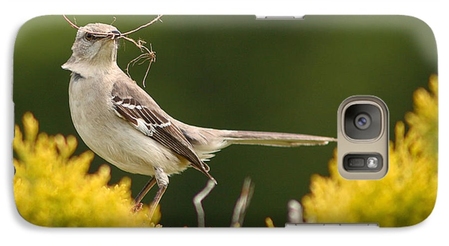 Mockingbird Galaxy S7 Case featuring the photograph Mockingbird Perched With Nesting Material by Max Allen