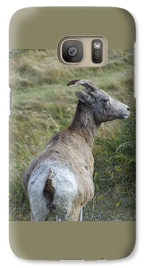 Bighorn Sheep Galaxy S7 Case featuring the photograph Mother Bighorn by Tiffany Vest