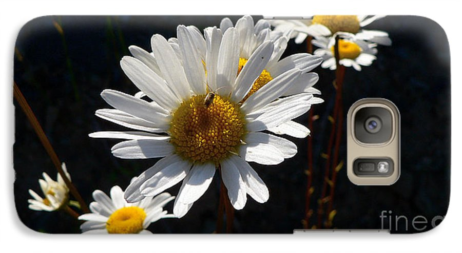 Flowers Galaxy S7 Case featuring the photograph Mountain Daisy by Larry Keahey