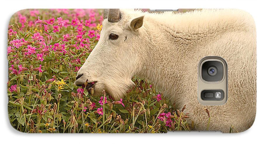Mountain Goat Galaxy S7 Case featuring the photograph Mountain Goat In Colorful Field Of Flowers by Max Allen