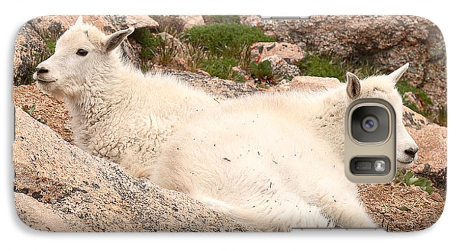 Mountain Goat Galaxy S7 Case featuring the photograph Mountain Goat Twins by Max Allen