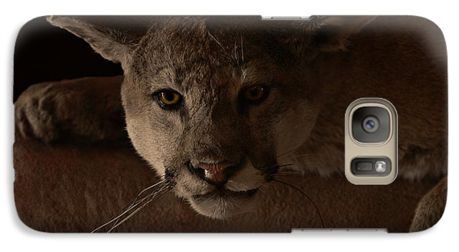 Cougar Galaxy S7 Case featuring the photograph Mountain Lion A Large Graceful Cat by Christine Till