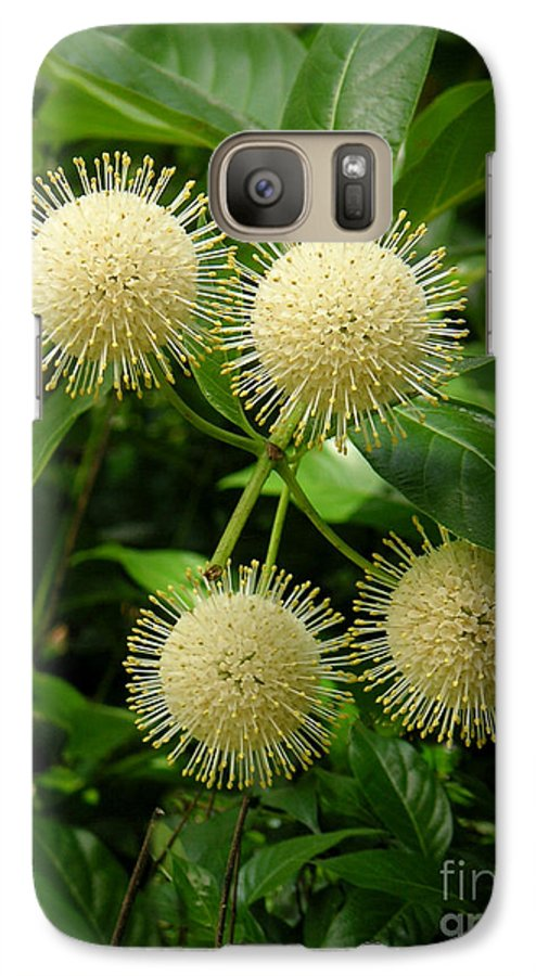 Nature Galaxy S7 Case featuring the photograph Nature In The Wild - Pin Cushions Of Nature by Lucyna A M Green