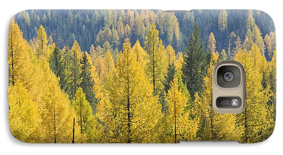 Trees Galaxy S7 Case featuring the photograph North Idaho Gold by Idaho Scenic Images Linda Lantzy