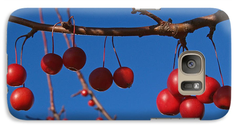 Autumn Galaxy S7 Case featuring the photograph Ornamental Crabapple Branch by Anna Lisa Yoder
