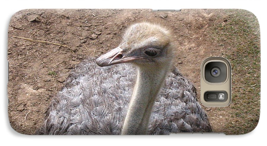 Ostrich Galaxy S7 Case featuring the photograph Ostrich by Melissa Parks