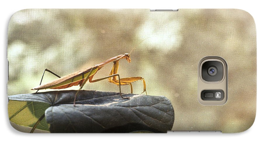 Praying Galaxy S7 Case featuring the photograph Pensive Mantis by Douglas Barnett