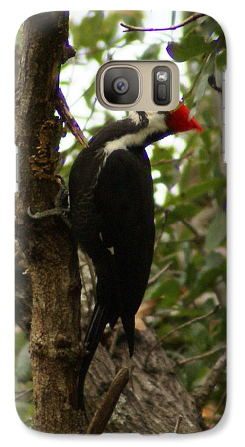Bird Galaxy S7 Case featuring the painting Pileated Woodpecker by Debbie May