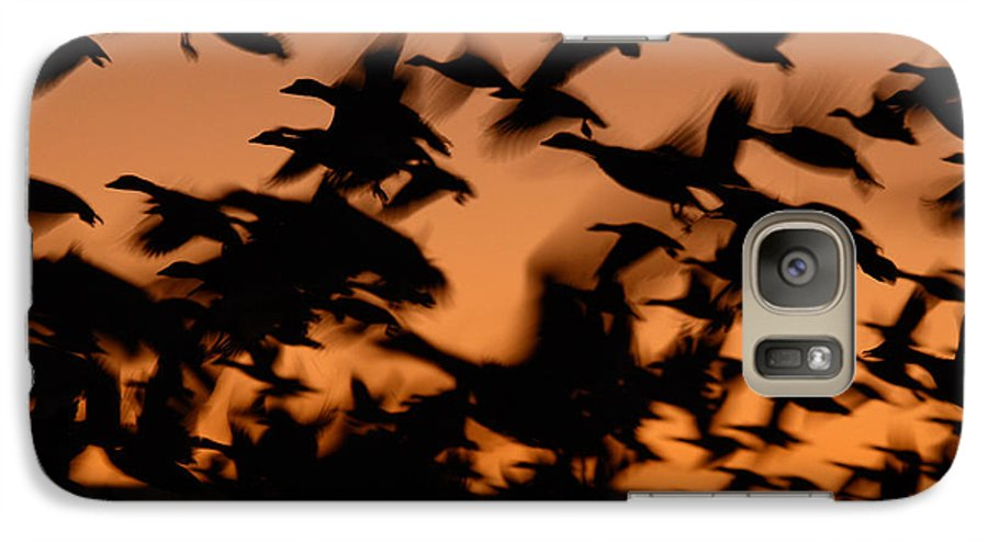 Geese Galaxy S7 Case featuring the photograph Pre-dawn Flight Of Snow Geese Flock by Max Allen