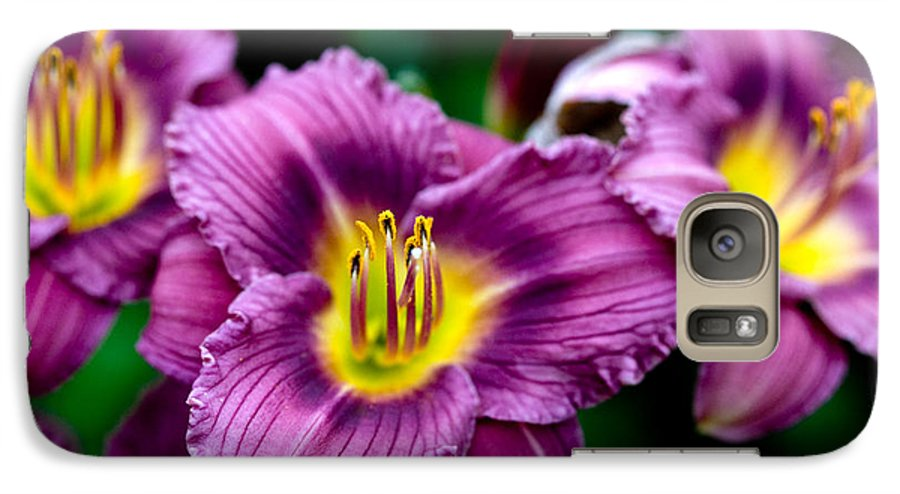 Flower Galaxy S7 Case featuring the photograph Purple Day Lillies by Marilyn Hunt