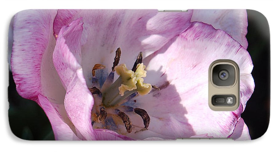 Purple Galaxy S7 Case featuring the photograph Purple Tulip by Suzanne Gaff