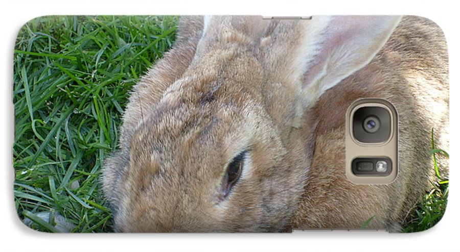 Rabbit Galaxy S7 Case featuring the photograph Rabbit Head On by Melissa Parks