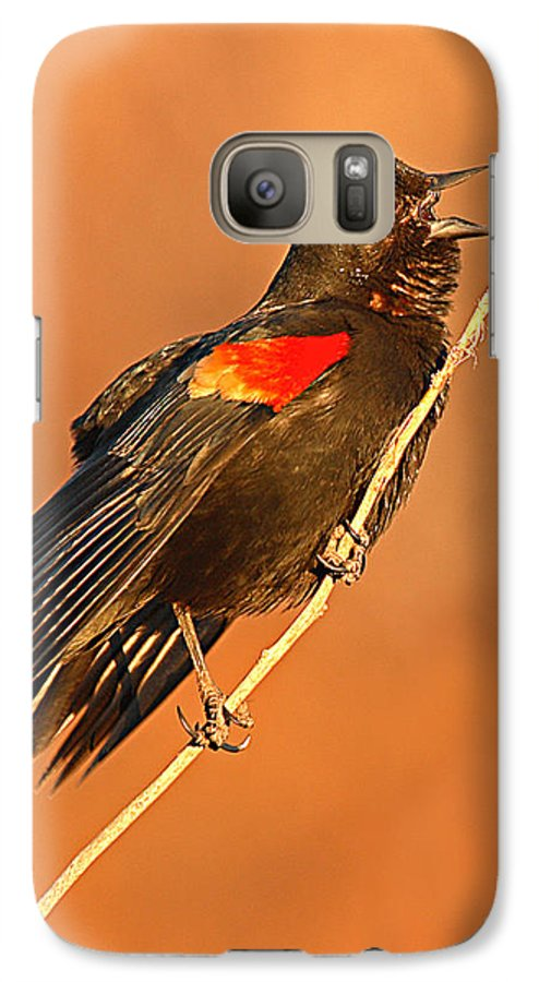 Blackbird Galaxy S7 Case featuring the photograph Red-winged Blackbird Belting Out Spring Song by Max Allen