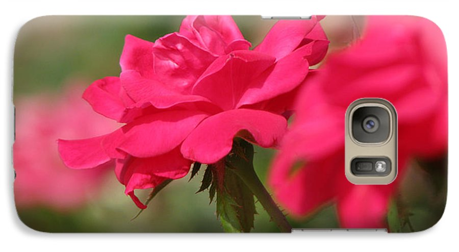 Rose Galaxy S7 Case featuring the photograph Roses by Amanda Barcon