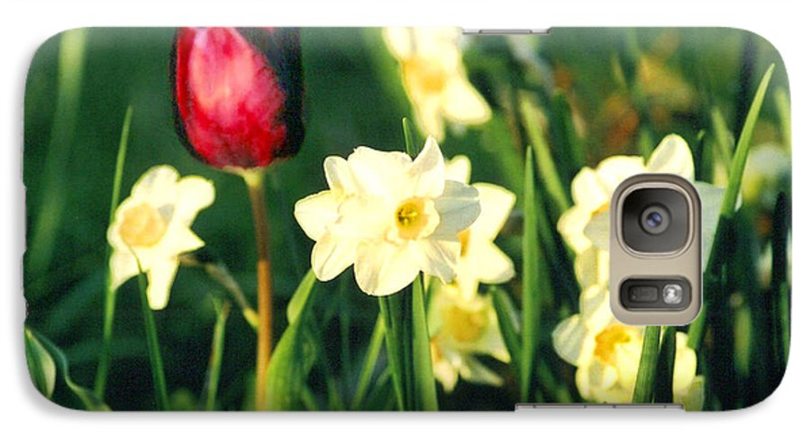Tulips Galaxy S7 Case featuring the photograph Royal Spring by Steve Karol