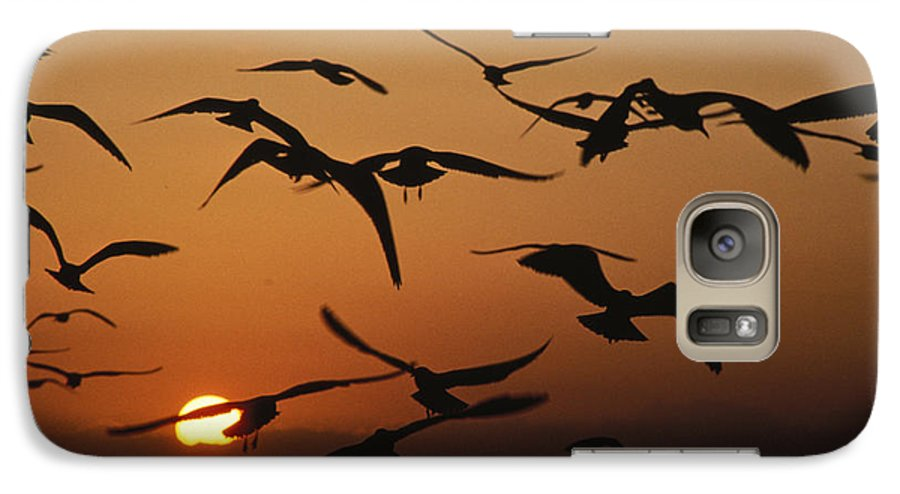 Birds Galaxy S7 Case featuring the photograph Seagulls In Sunset by Carl Purcell
