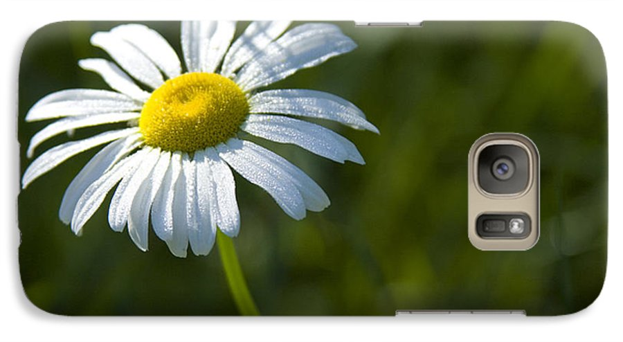 Daisy Galaxy S7 Case featuring the photograph Searching For Sunlight by Idaho Scenic Images Linda Lantzy