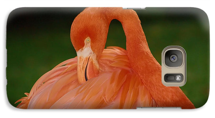 Flamingo Galaxy S7 Case featuring the photograph shy by Gaby Swanson
