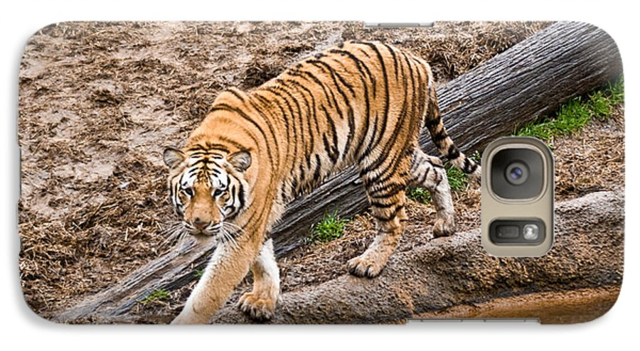 Tiger Galaxy S7 Case featuring the photograph Stalking Tiger - Bengal by Douglas Barnett