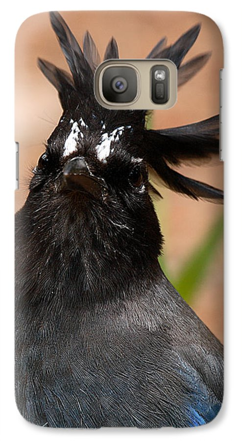 Jay Galaxy S7 Case featuring the photograph Stellar's Jay With Rock Star Hair by Max Allen