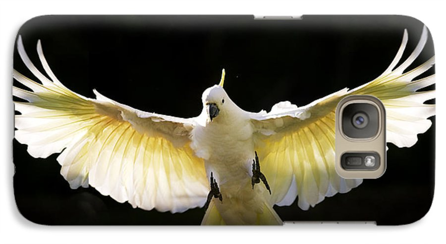 Sulphur Crested Cockatoo Australian Wildlife Galaxy S7 Case featuring the photograph Sulphur Crested Cockatoo In Flight by Avalon Fine Art Photography